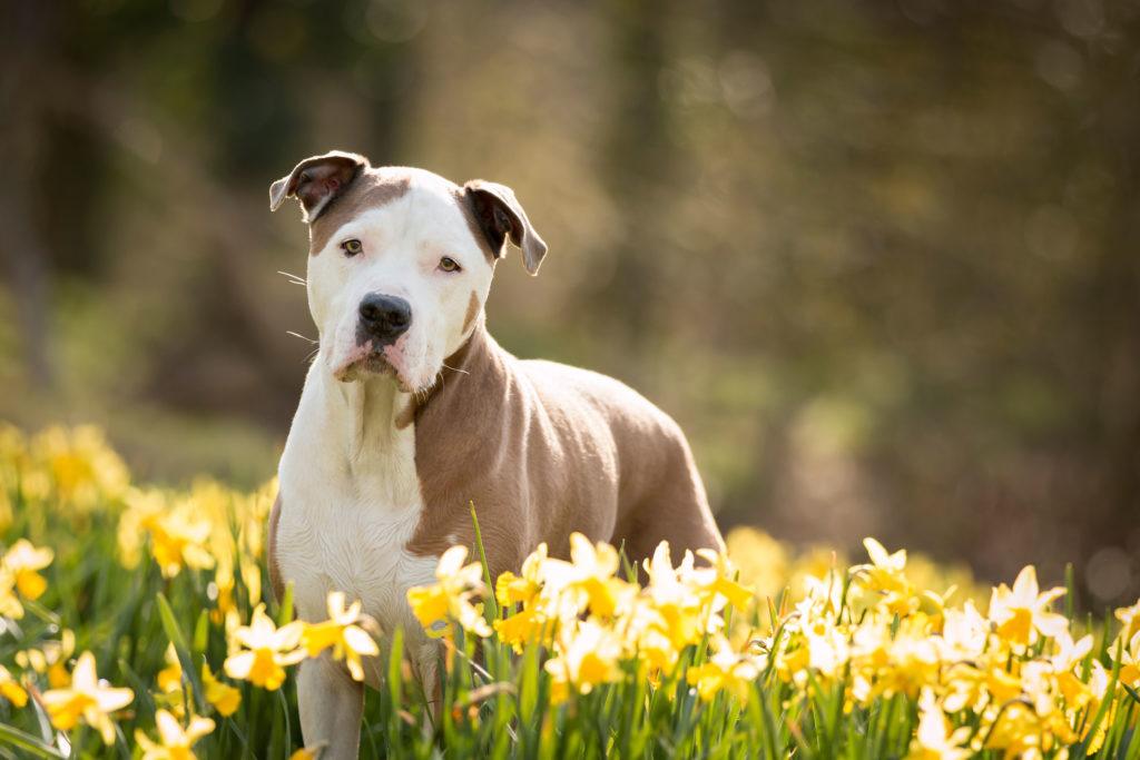 hond in beeld